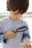 Boy examining seashell — Foto Stock