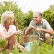 Senior Couple Working On Allotment — Stock Photo #64583967