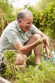 Man Working On Allotment — Stock Photo