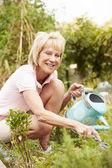 Senior Woman On Allotment — Stock Photo
