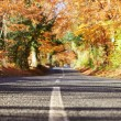 Country Road Through Autumn Forest — Stock Photo #68249405