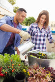 Couple Planting Rooftop Garden — Stock Photo