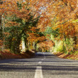 Country Road Through Autumn Forest — Stock Photo #68251445