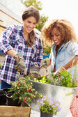 Female Friends Planting on Rooftop — Stock Photo