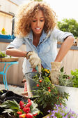Woman Planting On Rooftop Garden — Stock Photo