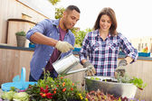 Couple Planting Rooftop Garden — Stockfoto