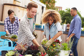 Friends Planting Rooftop Garden — Stock Photo