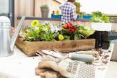 Woman Planting Rooftop Garden — Stock Photo