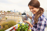 Woman Watering Plant  On Rooftop — Stock Photo
