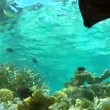 Underwater Tropical Ocean — Stock Video #71415611