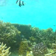 Underwater Tropical Ocean — Stock Video #71415979