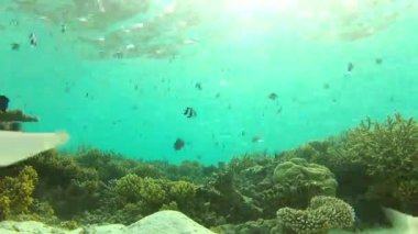 Underwater Tropical Ocean — Stock Video