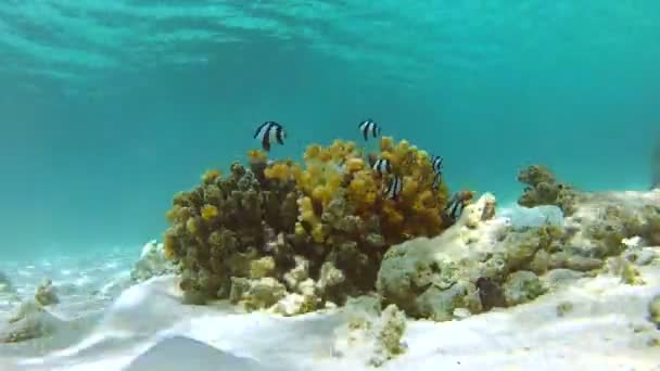 Underwater Tropical Ocean — Vídeo de stock