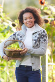 Woman Holding Basket Of Crab Apples — Stock Photo