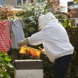 Man Collecting Honey From Hive — Stock Photo #71521485