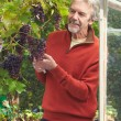 Mature Man Cultivating Grapes — Stock Photo #71521573