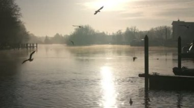 Silhouette Of Birds Flying Over River Thames — Stockvideo