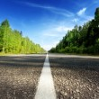 Road in deep forest — Stock Photo #51893947