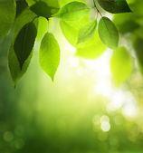 Green leaves in sunny forest — Stockfoto