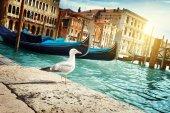 Seagull in Venice, Italy — Stock Photo
