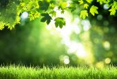 Sunny day in forest — Stock Photo