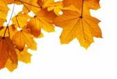 Autumn leaves shallow DOF — Stock Photo