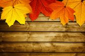 Wooden background with autumn maple leaves — Stock Photo