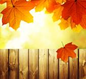 Fence in autumn forest — Stock Photo