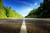 Road in deep forest  — Stockfoto