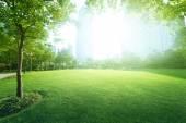 Sunny day in park — Stock Photo