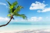 Caribbean sea and coconut palm — Stock Photo