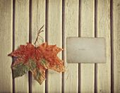 Autumn background with maple leaf — Stock Photo