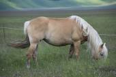 Horse pasturing — Stock Photo