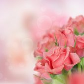 Card with pink roses and green petals — Stock Photo