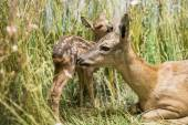 Close up of a deer family — Stock Photo