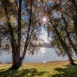 Sunlight trough trees — Stock Photo #61654511