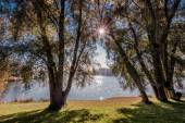 Sunlight trough trees — Stock Photo
