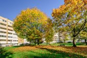 Autumn trees in a living block — Stock Photo