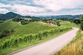 Wine Trail in Southern Styria — Stock Photo