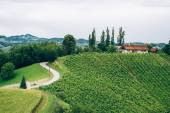 Vineyard in Southern Styria — Stock Photo