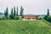 Winery in Southern Styria — Stock Photo