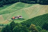 Vineyard in Styria — Stock Photo