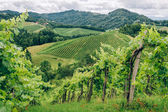 Grapevines in Southern Styria — Stock Photo