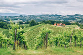 Hills of Southern Styria — Stock Photo