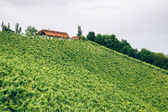 Farm on the hills of styria — Stock Photo