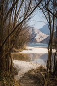 View through young trees on a lake — Stock Photo