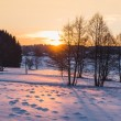 Winter forest at sunset — Stock Photo #69239781
