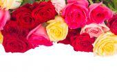 Frontera de rosas multicolores — Foto de Stock