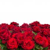 Bouquet of dark  red roses  close up — Stock Photo