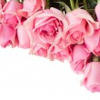 Border of fresh pink  roses — Stock Photo #53049163